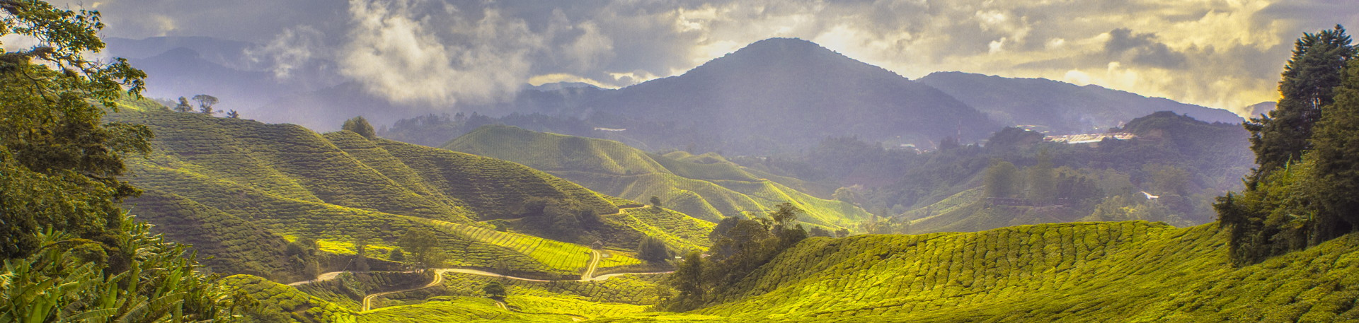 Triage web photo Malaysia