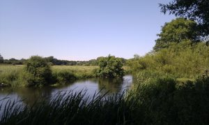 Reducing run-off into River Wensum