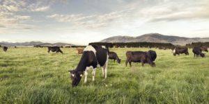 New Zealand farmer cooperative LIC meets Agri-Tech East members