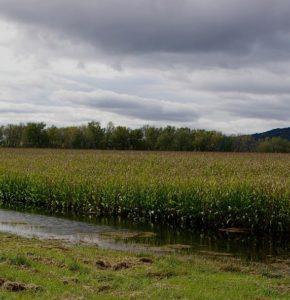 wet field web